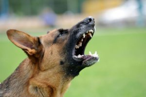 Dog Bite Injury Claims in Clarksburg, West VA